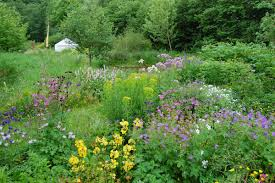 native garden plants noel u0027s garden blog telling the story of uk naturalistic planting