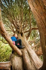 the 50 ultimate british locations for tree climbing u0026 beyond