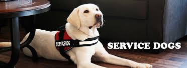 industrial puppy we sell the best quality service dog vests