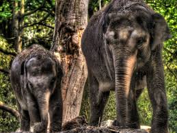 two elephants in the forest dry wood hd wallpaper wallpapers13 com