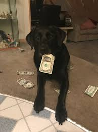 dog collects money to buy her own dog treats