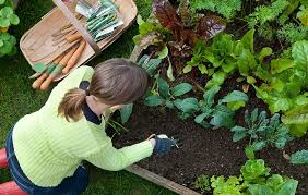 plan a beautiful vegetable garden