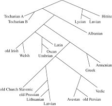 splits or waves trees or webs how divergence measures and