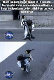 Cute Penguin Meme - i really need a penguin now the meta picture