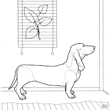 tremendous dachshund coloring pages dachshund dog page cecilymae