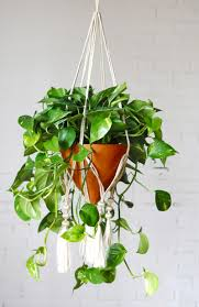 houseplants your guide to happy healthy houseplants