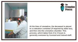 cremation procedure canine cremation process images search