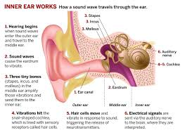 Ohio how do sound waves travel images Sound science april 7 2014 issue vol 92 issue 14 chemical jpg
