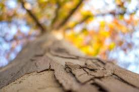 how some trees can defend themselves against and worse the