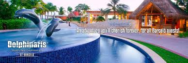 imagenes barcelo maya beach swim with dolphins in barcelo dolphinaris