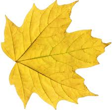 leaf free download clip art free clip art on clipart library