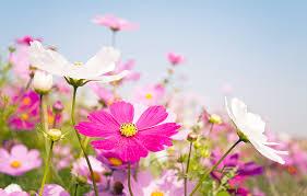 types of daisies a visual compendium ftd com