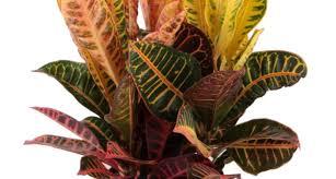 best office plants australia 11 best indoor vines and climbers