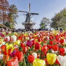 do the countryside keukenhof tour tours u0026 tickets