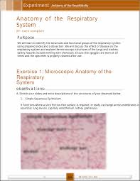 Anatomy Slides Lab Anatomy Of Respiratory System Experiment Anatomy Of The
