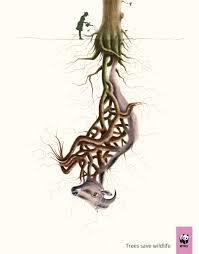 wwf gibbon leopard tiger crane red panda elephant nilgiri