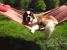 dogs puppies gifs threadless