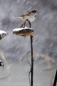 830 best rhythm of the rain images on pinterest rainy days