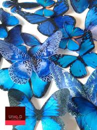 48 best blue butterfly images on blue butterfly blue