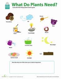 ideas about free grade 3 science worksheets bridal catalog