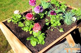 gardens gardening that saves water and your back