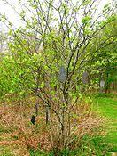 Wish Tree Wish Tree Wikipedia