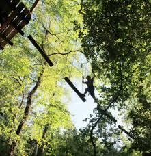 weekend travels trees adventure at glen harrows park car rentals