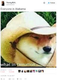 Know Your Meme Doge - where did this what in tarnation meme come from outoftheloop