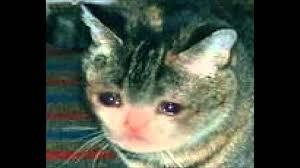 Sad Cat Meme - sad cat theme youtube