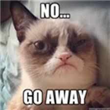 Grumpy Cat No Meme - grumpy cat no go away roblox