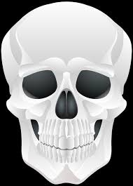 halloween png transparent halloween skull png clip art gallery yopriceville high