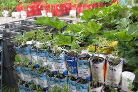 urban gardening ideas small garden ideas urban garden container