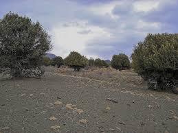 native plants of pakistan kapip wild olive forest in zhob balochistan pakistan f u2026 flickr
