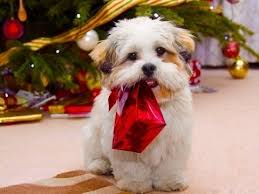 dogs presents compilation