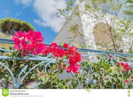 Beautiful House Plants Beautiful Bougainvillea And Blurred Greek House And Plants In The