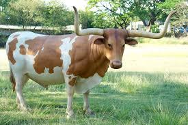 Decorative Longhorns Texas Longhorn Steer Life Size Statue 11ft