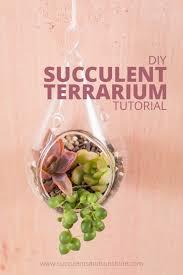 how to make a succulent terrarium succulents and sunshine