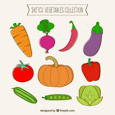 sketch vegetables collection vector premium download