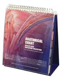 Best Anatomy And Physiology Textbook Buy Human Anatomy Books Online Best Anatomy Textbooks U2013 Abc Books