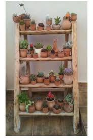 20 best cactus y terrarios images on pinterest plants gardening