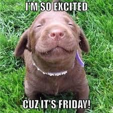 Finally Friday Meme - puppy reel marketing