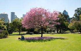 City Botanic Gardens File Brisbane City Botanic Gardens Lawn Jpg Wikimedia Commons