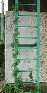 Support For Climbing Plants - climbing plant simple english wikipedia the free encyclopedia