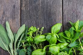 Indoor Herbal Garden How To Grow An Indoor Herb Garden Digital Trends