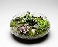 flori design inc plantant com