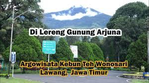 Teh Rolas Wonosari agrowisata perkebunan teh wonosari lawang jawa timur indonesia