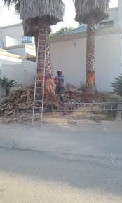 Tree Felling Cutting Of Any Type Of Tree Edenvale Gumtree