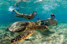 Hawaii snorkeling images 21 most beautiful amazing snorkeling adventure best amazing jpg