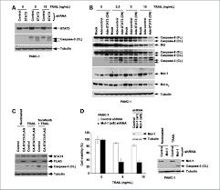 sorafenib inhibits stat3 activation to enhance trail mediated