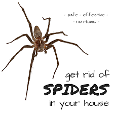 tremendous how to get rid of spiders in the basement awesome